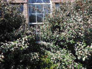 termite bush 2